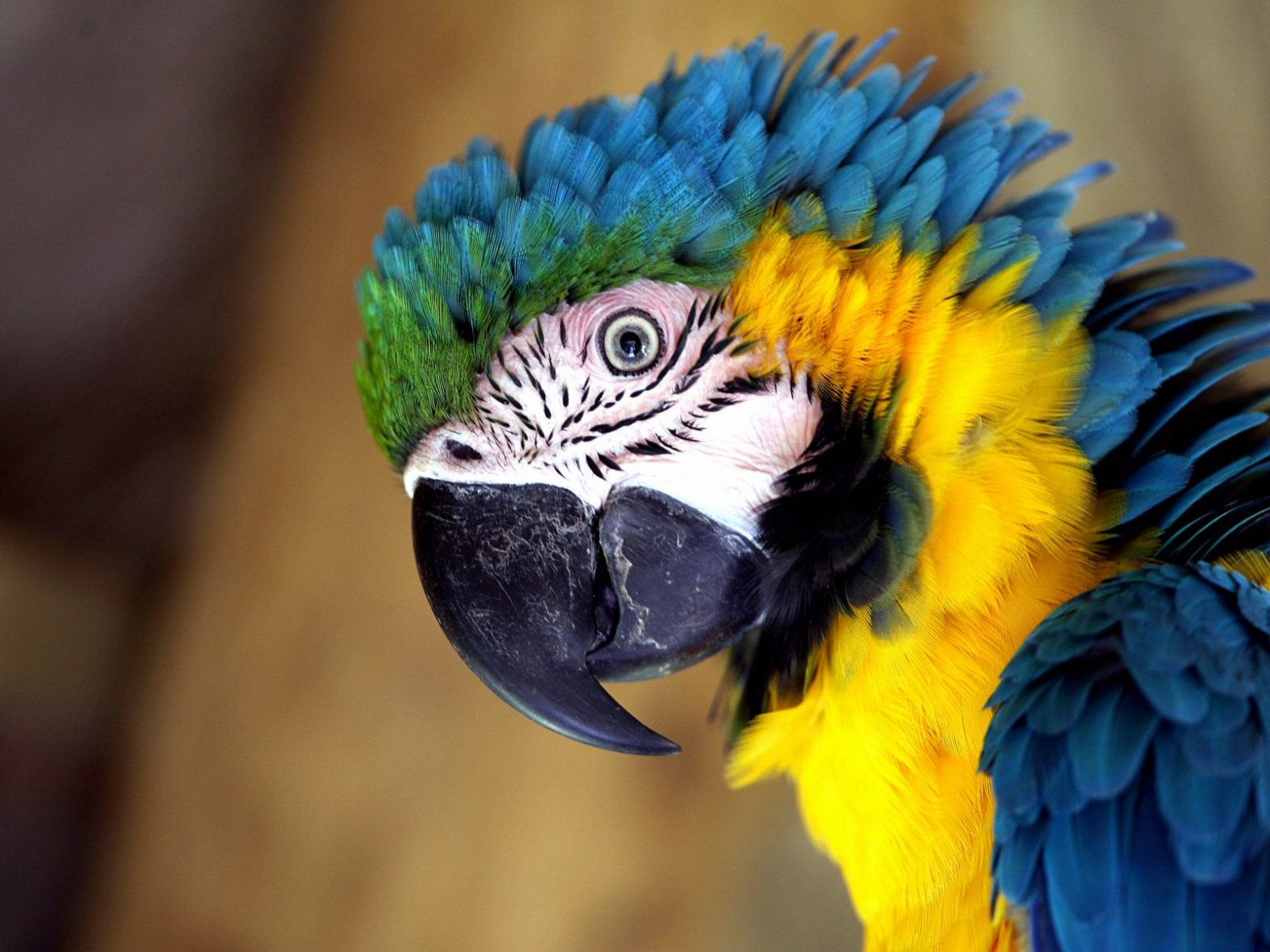 Best tips for caring a parrot