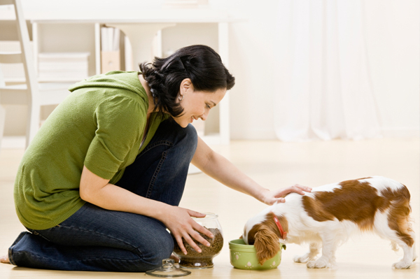 Pet Care and Nutrition Basics