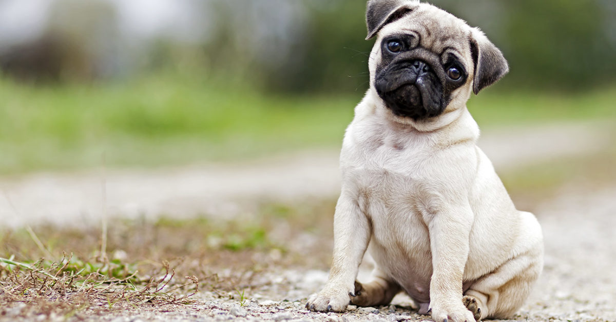 most popular pets and their typical care tips