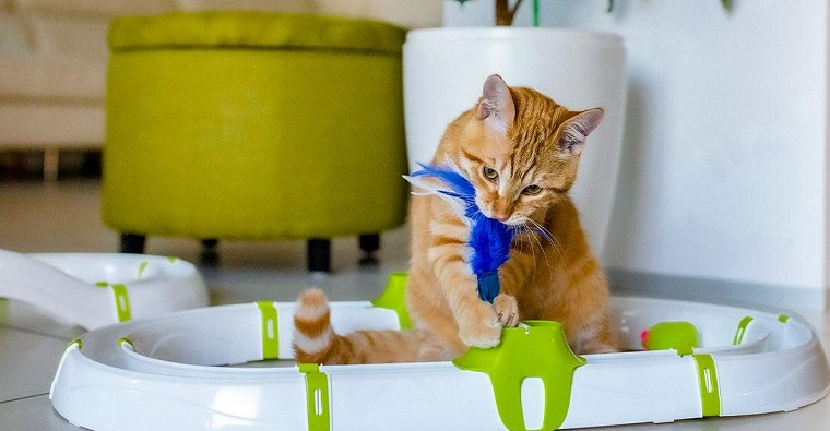 A Step-by-Step Guide to Buying Pet Supplies over the Internet