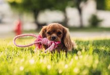 Advantages and the most trusted online pet supplies store